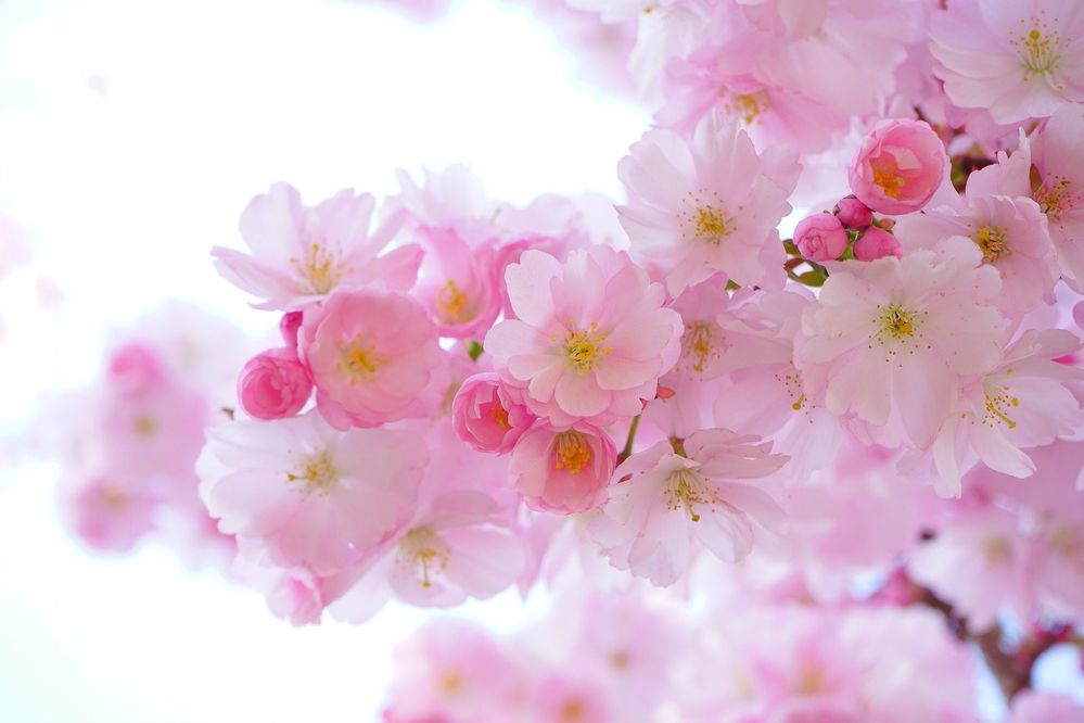 planes para hacer en primavera.jpg